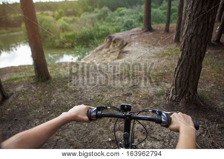 landscape with bike with daylight and pines