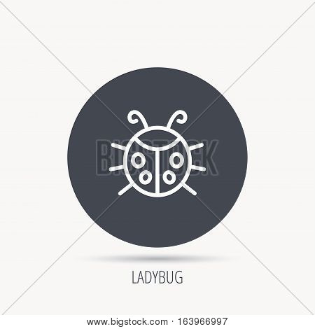 Ladybug icon. Ladybird insect sign. Flying beetle bug symbol. Round web button with flat icon. Vector