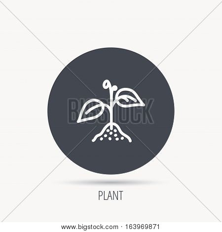 Plant with leaves icon. Agricultural or gardening sign symbol. Round web button with flat icon. Vector