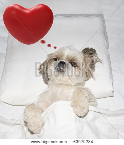 Cute valentine dog laying in bed and dreams