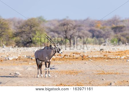 Oryx Standing In The Colorful Landscape Of The Majestic Etosha National Park, Best Travel Destinatio