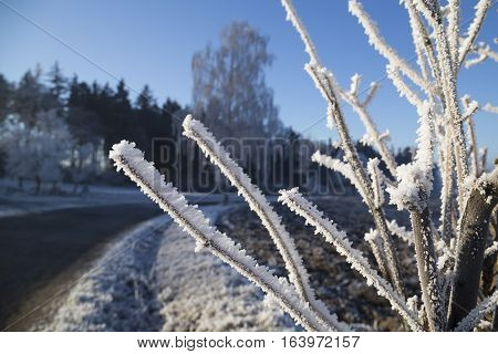 Rime on a branch in winter snow