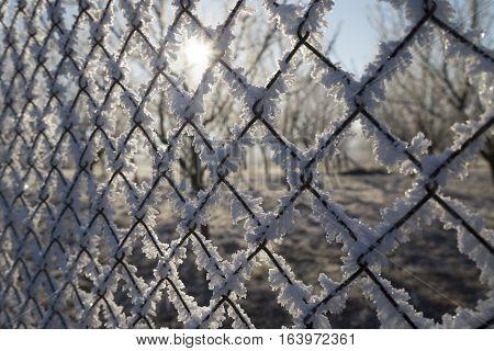 Rime on a fence winter snow sun