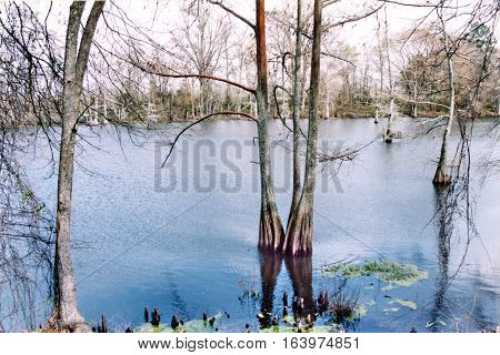 Mississippi USA - March 2002: The Black Bayou.