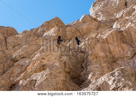 Brids filght over Chak Chak mountain village in Iran holy place for Zoroastrians