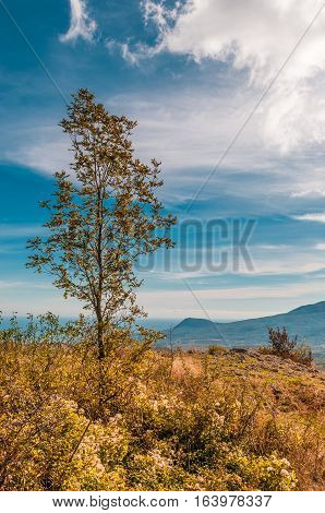 lonely tree on hill in field with mountains on background and blue sky with beautiful clouds