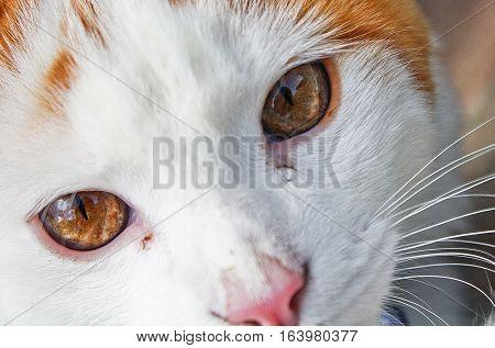 Deep look of a baby cat, orange eyes