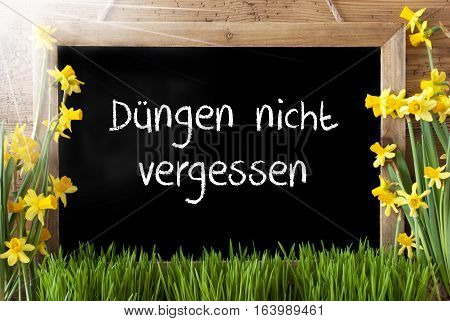Blackboard With German Text Duengen Nicht Vergessen Means Do Not Forget To Dung. Sunny Spring Flowers Nacissus Or Daffodil With Grass. Rustic Aged Wooden Background.