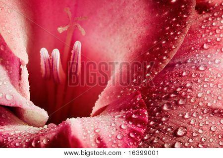 Red flower closeup