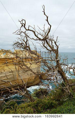 Dead tree facing the Tasman Sea and the Bass Strait in Victoria, Australia