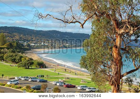 Gum tree and the beach of Lorne on the Great Ocean Road in Victoria, Australia
