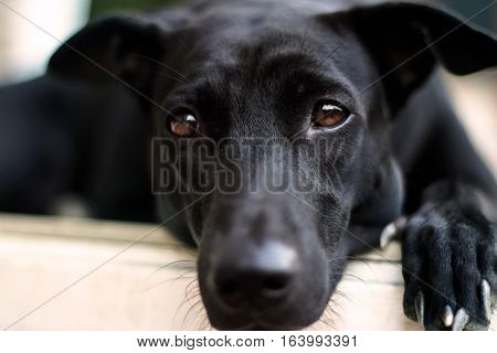 Close up lonely face of black dog
