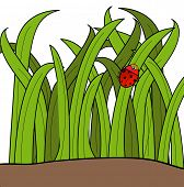 lady bug cartoon climbing up a blade of grass - vector poster