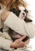 child holding puppy - girl hanging on to english bulldog puppy poster