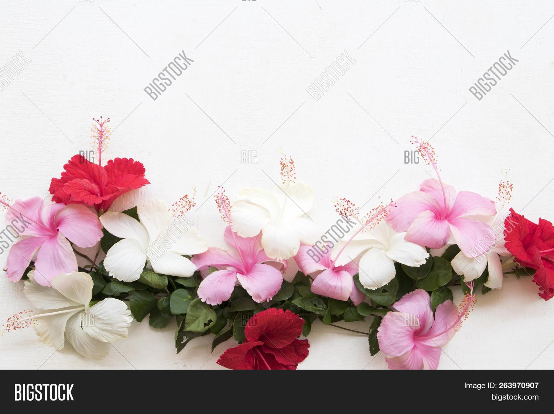 Redpinkwhite Flowers Image Photo Free Trial Bigstock