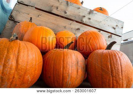 Harvest Pumpkin Rice Straw Background. Haloween Party.