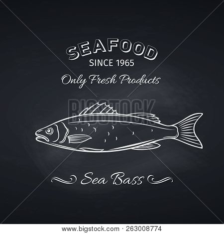 Hand Drawn Sea Bass Fish On Chalkboard. Seafood Icon Menu Restaurant Design. Engraving Style. Vector