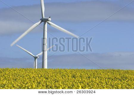 Wind Turbines and field