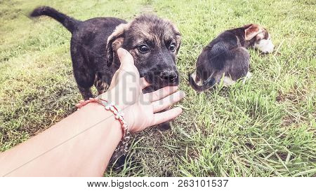 Puppy Playfully Bites Human Fingers On The Lawn, Two Puppies And A Hand
