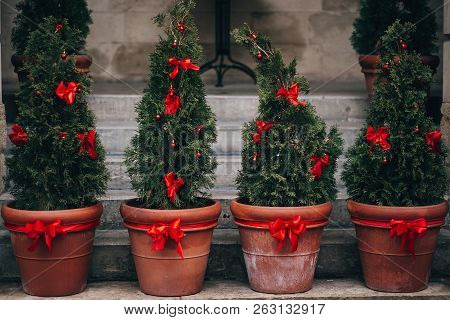 Stylish Christmas Street Decorations, Green Fir Branches With Red Bows On Christmas Trees In Pots  I