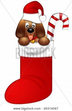 Cute Puppy Dog With Red Santa Hat In Stocking