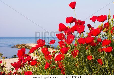 Poppies on the beach, Greece