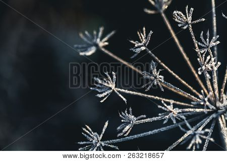 Frozen Flower In Blue Tone, Very Shallow Focus A