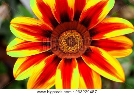 A Macro Of A Red And Yellow Flower