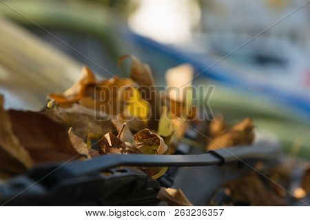 Autumn In The City. Autumn Leaves On The Car. Dry Autumnal Leaves On The Car Glass. Autumn.. Autumna