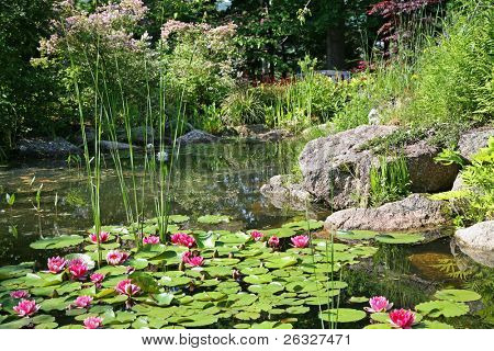 Tropical red waterlilies in a peaceful landscaped pond.