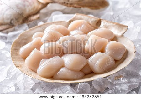 Fresh Raw Scallops In Shell On A Bed Of Ice.