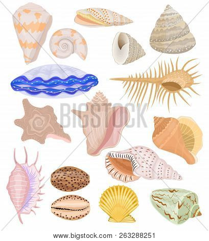 Shells Vector Marine Seashell And Ocean Cockle-shell Underwater Illustration Set Of Shellfish And Cl
