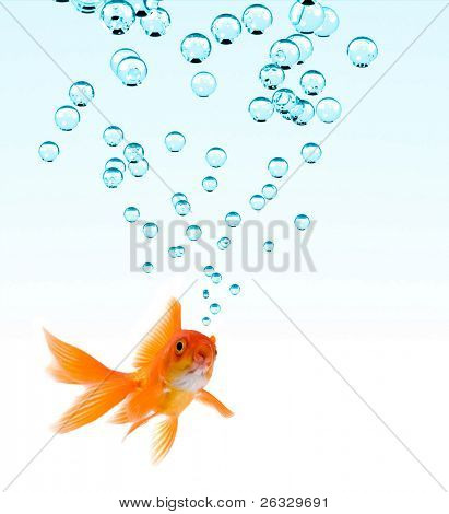 High resolution image of goldfish making bubbles.