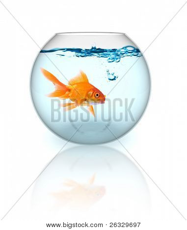 Goldfish in the bowl with bubbles