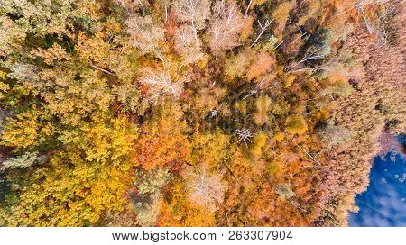 Lake And Autumn Forest With Colorful Green And Yellow Leaves, Aerial Drone View