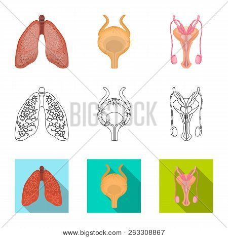 Vector Illustration Of Body And Human Sign. Set Of Body And Medical Vector Icon For Stock.