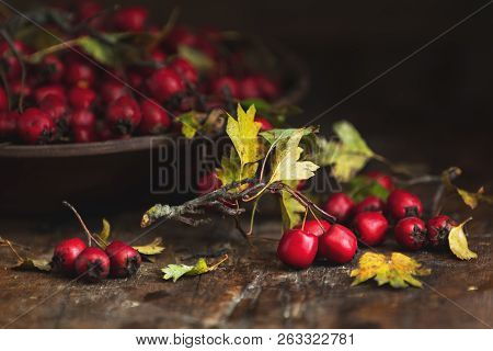 Autumn Harvest Hawthorn Berry With Leaves In Bowl On A Wooden Table Background