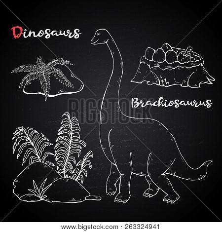 Vector Brachiosaurus With Plant And Stone On Chalk Blackboard.