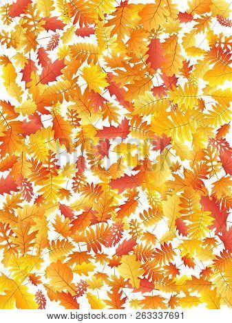 Oak, Maple, Wild Ash Rowan Leaves Vector, Autumn Foliage On White Background. Red Orange Yellow Oak
