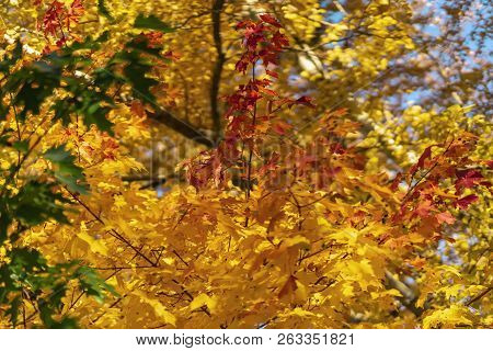 Bright Scenic Of Bright Vivid Colorful Autumn Branches, Fall. Green, Yellow, Red And Orange Foliage.