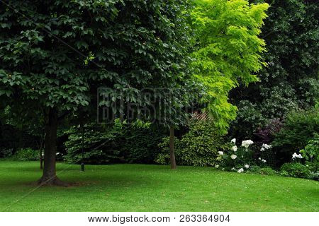 Summer landscape - colorful summer city park with deciduous green trees
