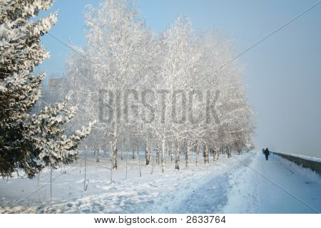 Snow-Covered Path