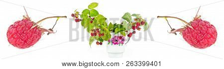 Branches Of Bush Raspberry With Ripe Berries In A White Cheap Cup. Collage