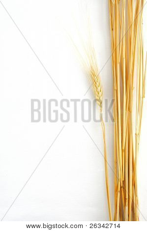 Weizen, isoliert auf weiss