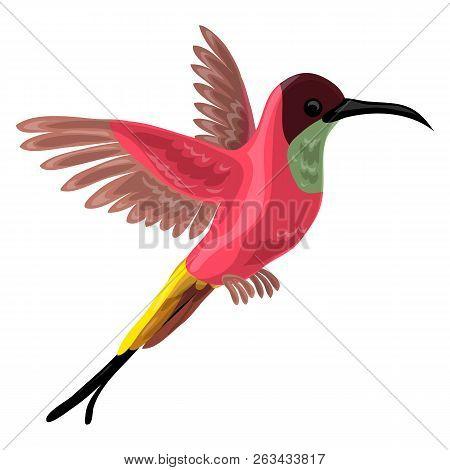Colibri Bird Icon. Cartoon Of Colibri Bird Vector Icon For Web Design Isolated On White Background
