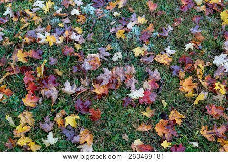 Colorful Autumn Leaves On The Green Grass Ground, Background, Texture
