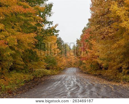 Beautiful Autumn Trees Along A Country Road
