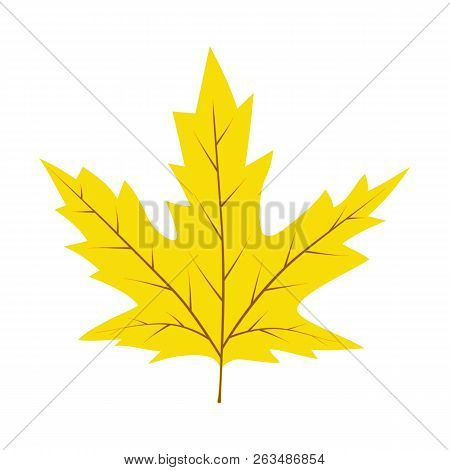 Autumn Yellow Leaf. Autumn Concept. Yellow Leaf Isolated On White Background. Vector Stock.
