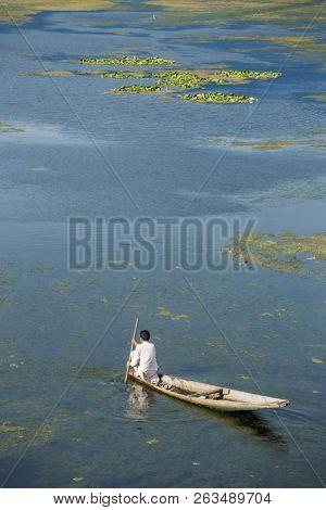 Man riding a shikara boat on the Dal lake in Srinagar, Kashmir, India.