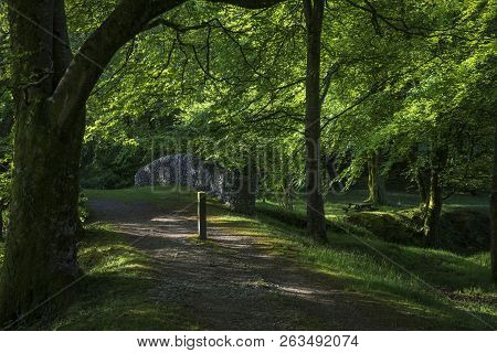 Landscape Image Of Morning Woodland With Trees, A Bridge And Bluebell Flowers